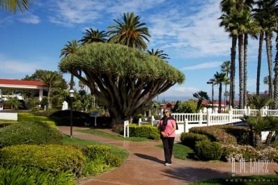 San Diego Beaches 032