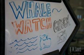Whales SD  054