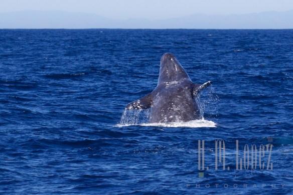 Whales SD  089