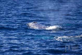 Whales SD  099