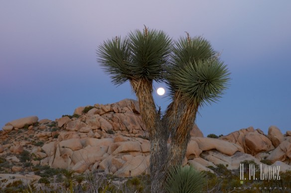 joshua tree np  021