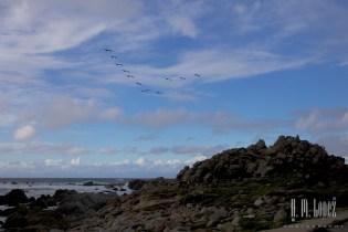 Monterey  001