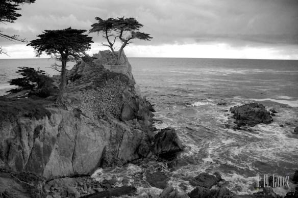 Monterey  024