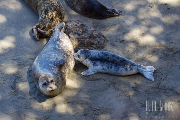 Point Lobos  004