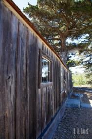 Point Lobos  013