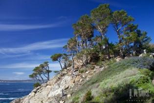 Point Lobos  021