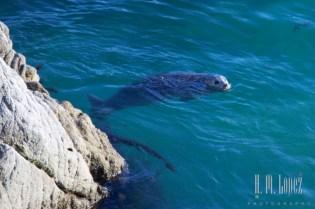 Point Lobos  041