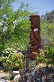 Sequoia  003