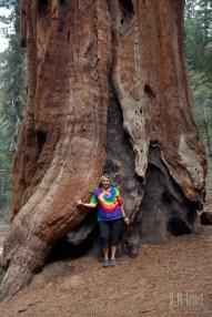 Sequoia 035