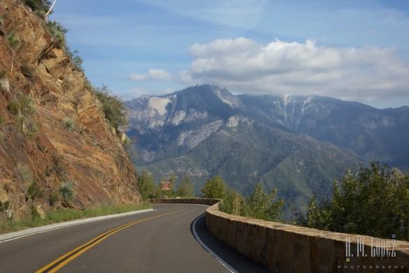 Sequoia  063
