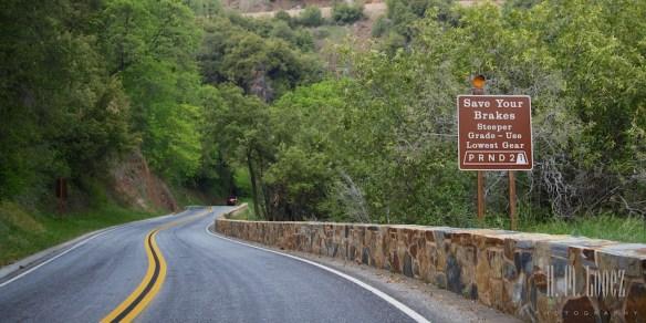 Sequoia  065