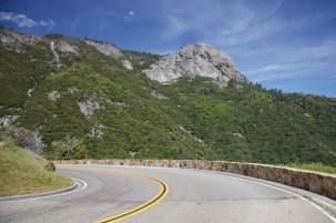 Sequoia 069