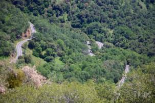 Sequoia 071