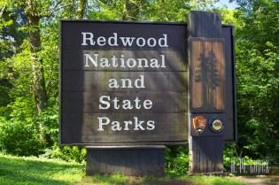 north redwoods  013