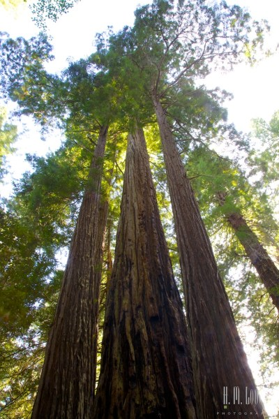 north redwoods  041