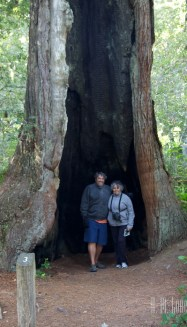 north redwoods  044
