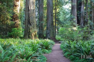 north redwoods  068