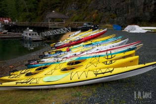 Telegraph Cove Kayak  004