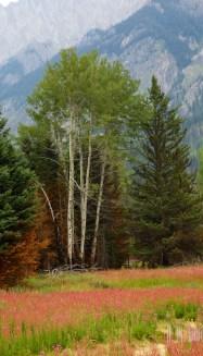 Banff  035