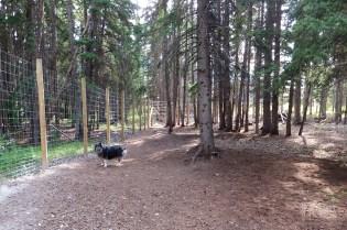 Banff  163