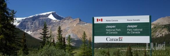 Jasper NP  017