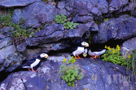 Kenai Fjords NP 15