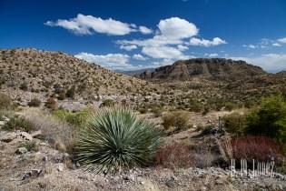 Tucson-85