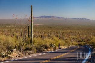 sonoran desert-19