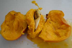 mango cut open