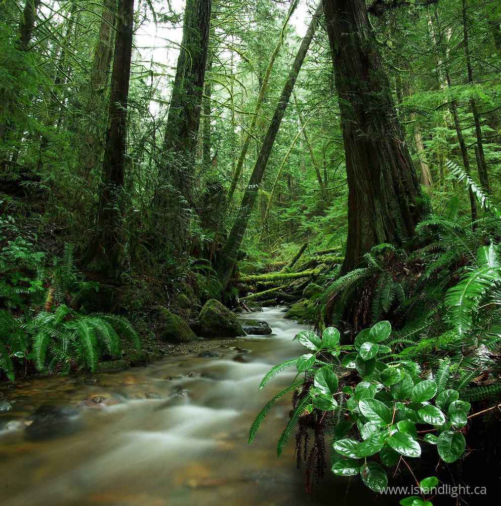 Gorge Creek Rainforest Photo From Gorge Harbour Cortes
