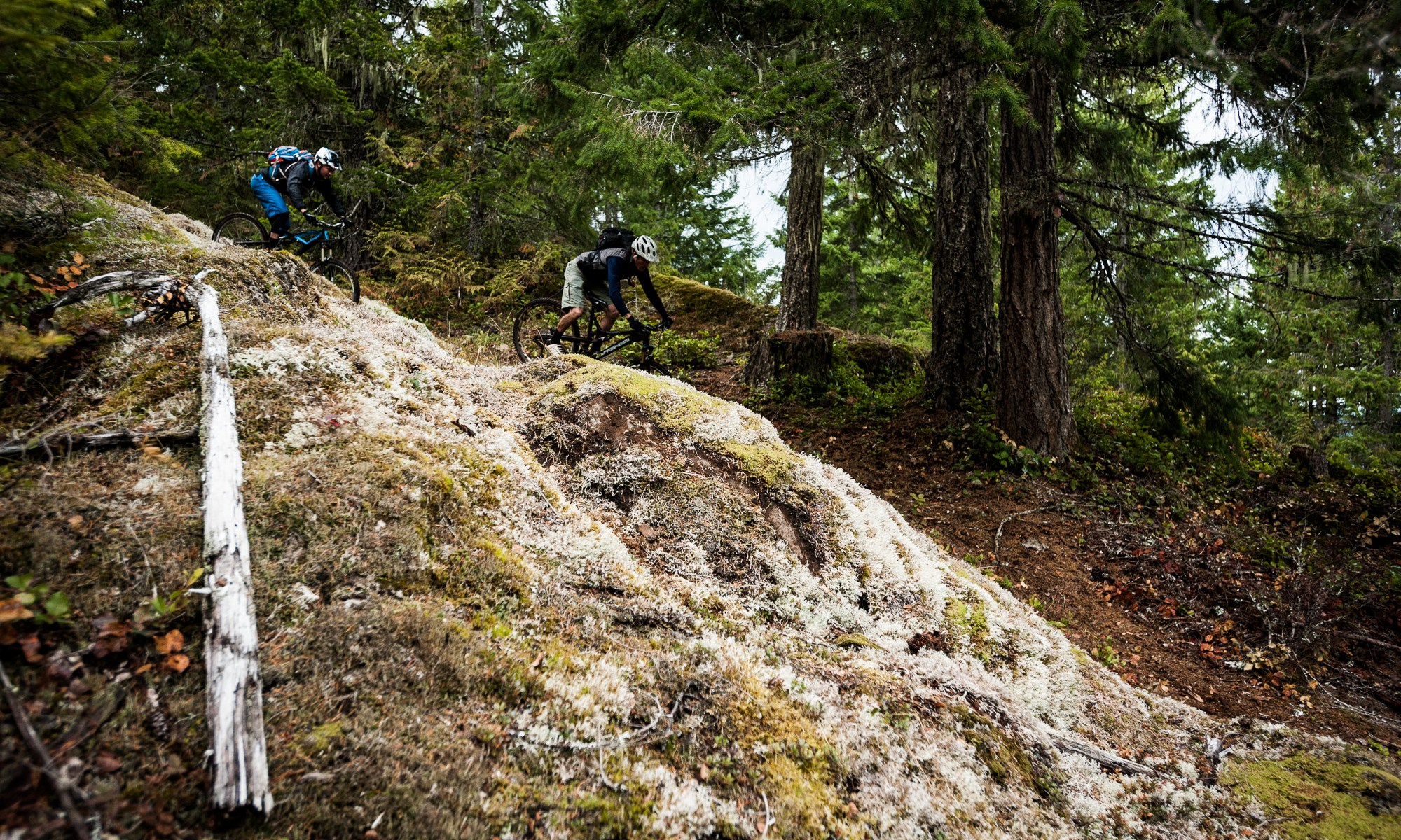 Two mountain bikers at Forbidden Plateau