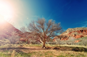 sun-desert-dry-tree-medium