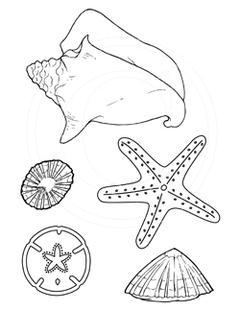 Hawaiian Shell Collection