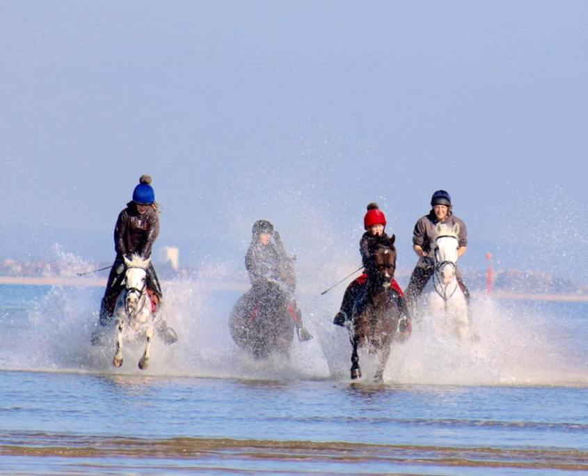 Horses in surf