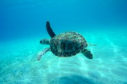 Swim with the Sea Turtles