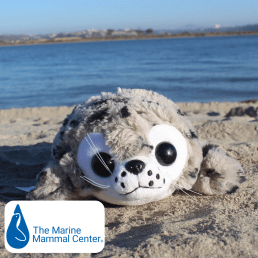 front view of sammy the seal shore buddies stuffed animal on the beach