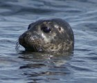 sandra-jo-and-the-seals-0048