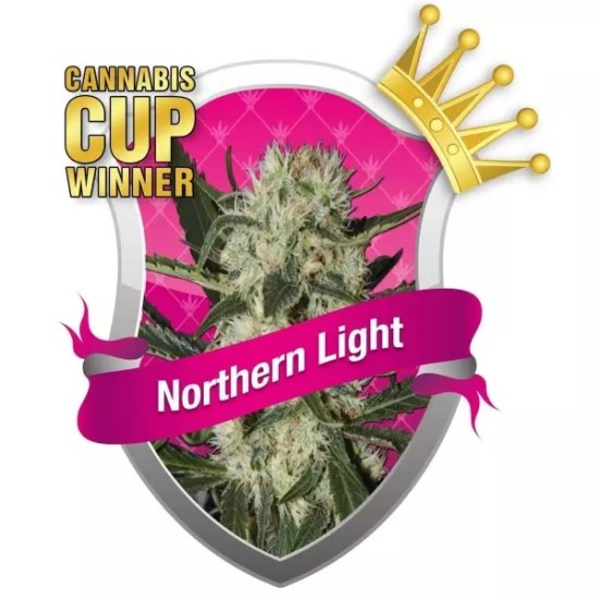 , Northern Lights Cannabis Strain Review Plus Your Chance to Win Cananbis Seeds!