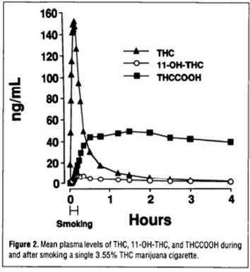 , How Long After Smoking Does THC Stay In Your System?