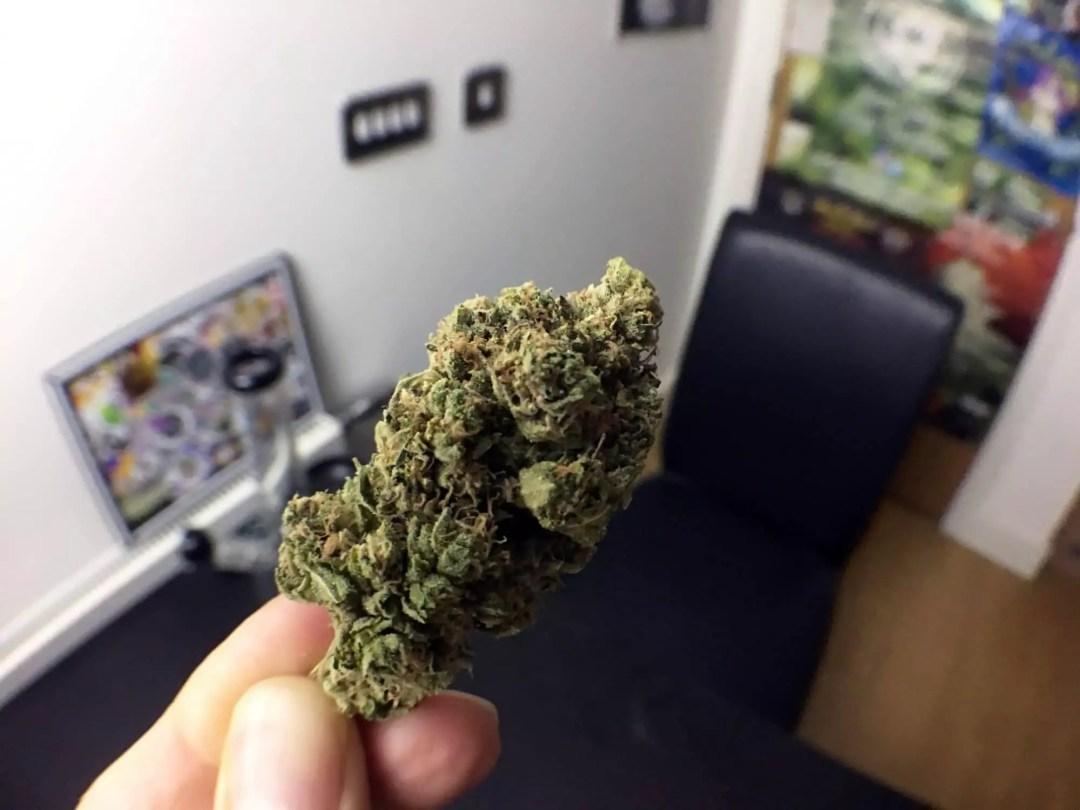 Skywalker OG, Skywalker OG Cannabis Strain Review