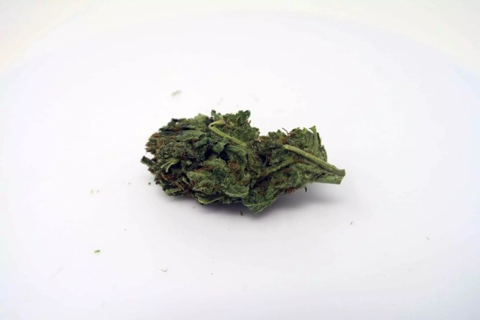 , Hawaiian Haze Cannabis Strain Review