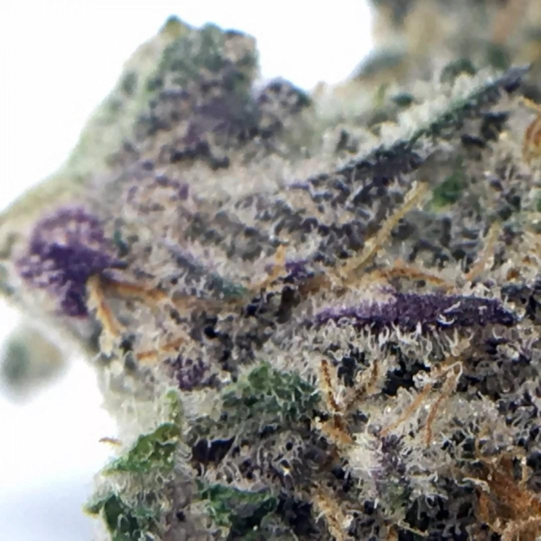Dolato cannabis strain, Dolato Cannabis Strain Review, ISMOKE