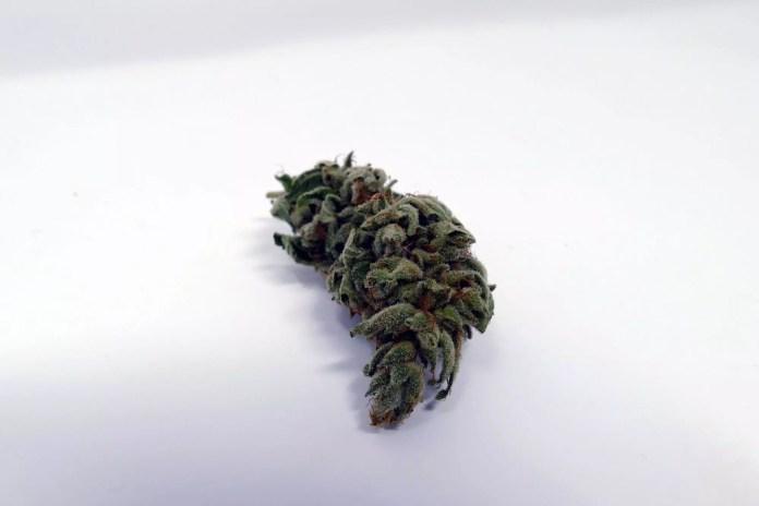 Gorilla Glue #4, Gorilla Glue #4 Cannabis Strain Information & Review