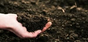 Amazing Tips on How to Make Soil More Fertile