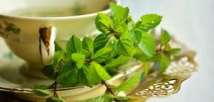 backyard healing herbs review
