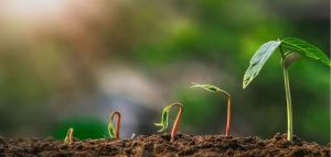 How to Make Vegetable Garden Grow Faster