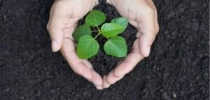 How to make soil more acidic