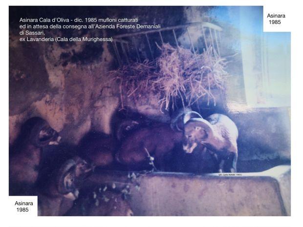Mufloni - Lavanderia - C. Hendel