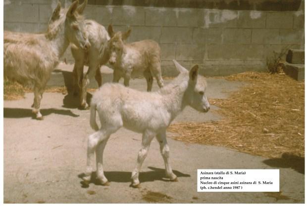 prima nasc. hendel 1987