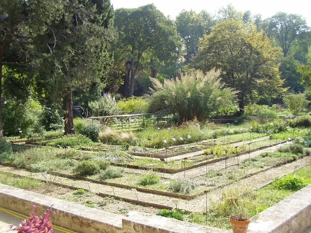 Jardin des plantes de montpellier isolated traveller - Jardin des plantes de montpellier ...